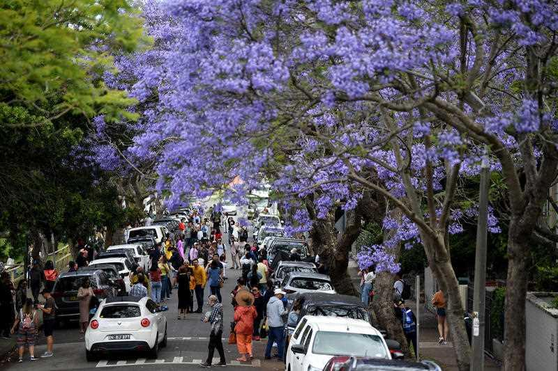 People pose for a photo amongst jacaranda trees at Kirribilli in Sydney.