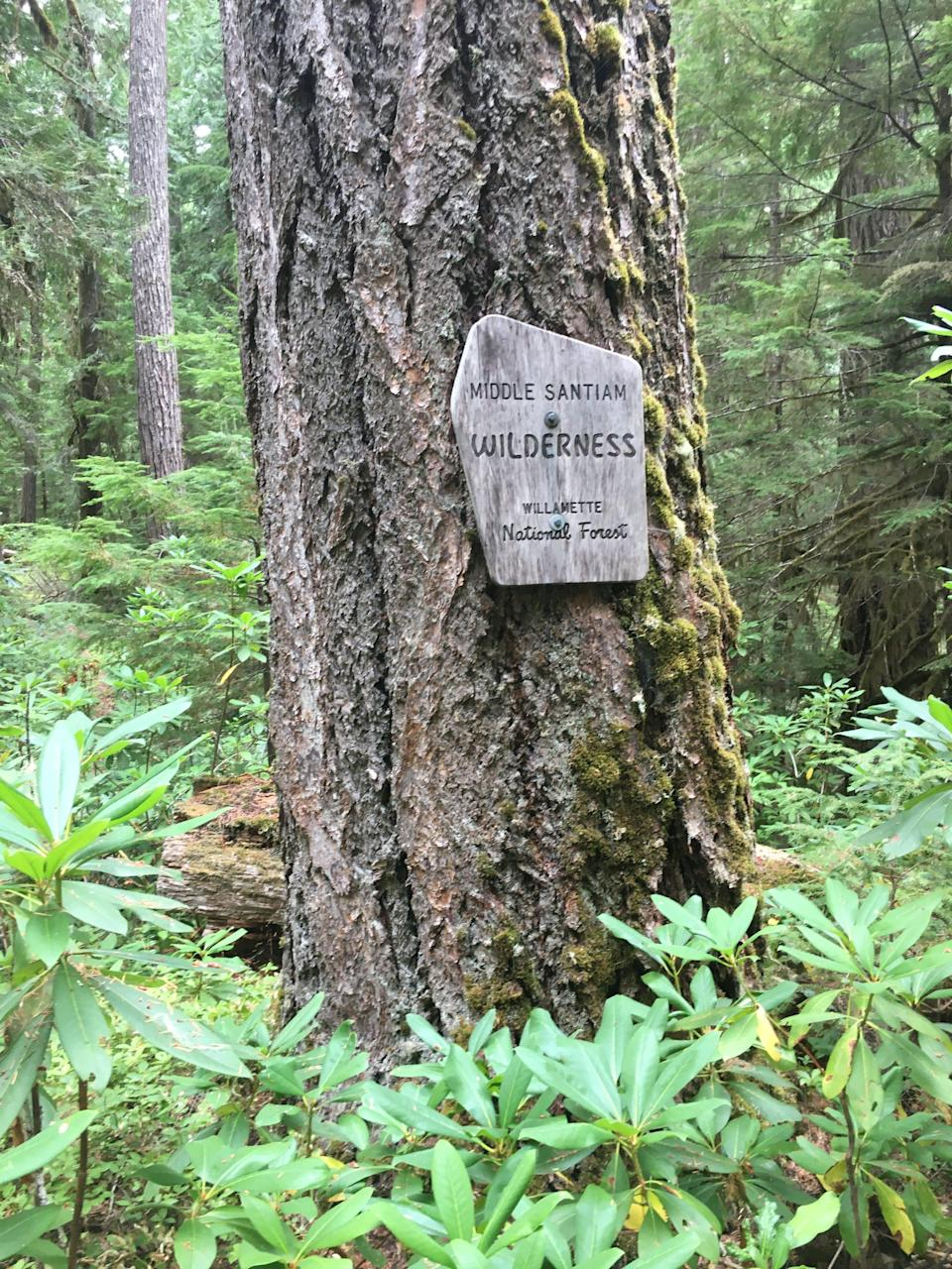 Part of the Old Cascades backpacking loop travels through part of the Middle Santiam Wilderness.