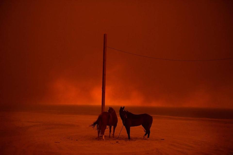 <p>Evacuated horses stand tied to a pole, as smoke from a wildfire billows above them, on Zuma Beach, in Malibu, California, USA, on 10 November. (Wally Skalij/Los Angeles Times) </p>