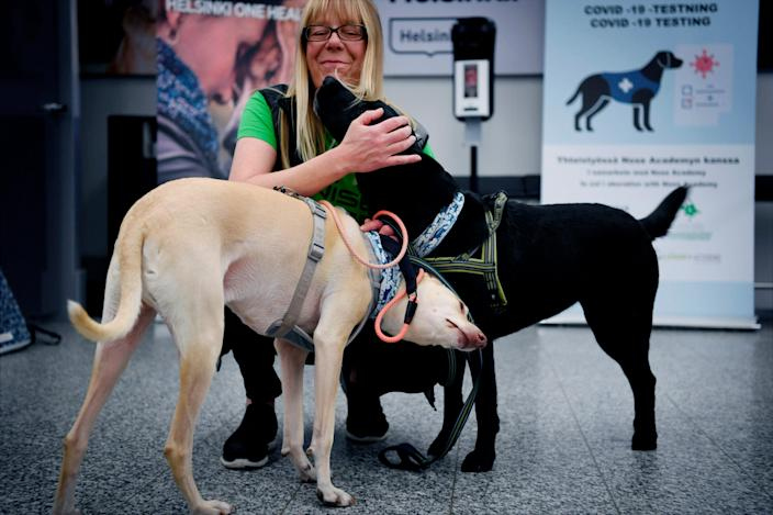Sniffer dogs named Kossi, left and Miina react with trainer Susanna Paavilainen at the Helsinki airport in Vantaa, Finland, Sept. 22, 2020. The dogs have been trained to detect the coronavirus from arriving passenger samples at the airport.