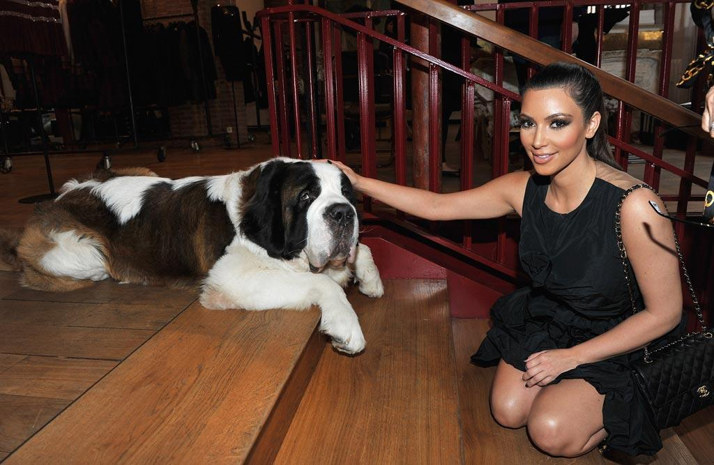 """While in Paris promoting """"Keeping Up With the Kardashians,"""" Kim K. paid a visit to the Azzedine Alaia boutique and made friends with the designer's adorable St. Bernard, Didine. Pascal Le Segretain/<a href=""""http://www.gettyimages.com/"""" target=""""new"""">GettyImages.com</a> - September 16, 2010"""