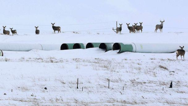 PHOTO: Deer gather at a depot used to store pipes for the planned Keystone XL oil pipeline in Gascoyne, N.D., Jan. 25, 2017. (Terray Sylvester/Reuters, FILE)