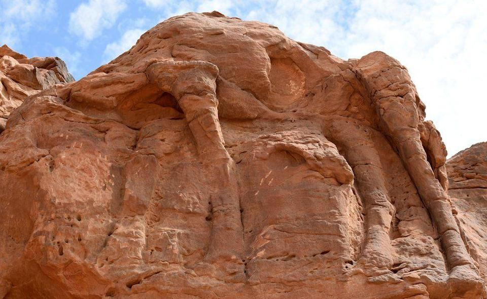 These camel carvings in Saudi Arabia date back 8,000 years