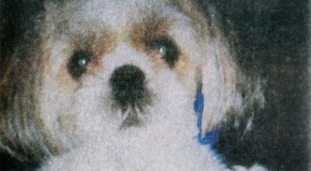 This copy photo shown during court is of Honey Bey, a dog thrown into traffic and killed during an August 2011 argument between her owner and neighbour. Photo: AP.