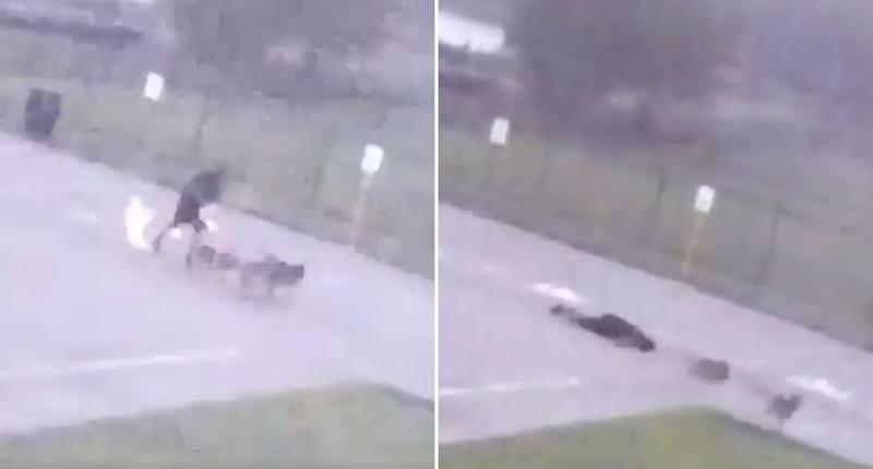 A man walking dogs is struck by lightning with sparks seen at his feet. He collapses. The dogs run away in fear.