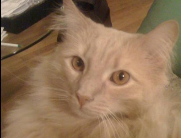 Finding Jack: Frantic search after airline loses cat