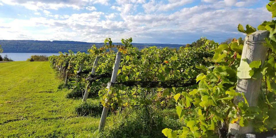 """<p><strong>Best East Coast Wine Region </strong></p><p>This upstate New York <a href=""""https://www.bestproducts.com/fun-things-to-do/g2504/best-wineries-in-new-york-near-me/"""" rel=""""nofollow noopener"""" target=""""_blank"""" data-ylk=""""slk:wine-making region"""" class=""""link rapid-noclick-resp"""">wine-making region</a> is home to more than 100 wineries, many clustered around Seneca and Cayuga lakes. Take a tour and have a tasting (the region is known for its rieslings) at scenic wineries like <a href=""""https://go.redirectingat.com?id=74968X1596630&url=https%3A%2F%2Fwww.tripadvisor.com%2FAttraction_Review-g47877-d3598084-Reviews-Chateau_Lafayette_Reneau-Hector_Finger_Lakes_New_York.html&sref=https%3A%2F%2Fwww.countryliving.com%2Flife%2Fg37186621%2Fbest-places-to-experience-and-visit-in-the-usa%2F"""" rel=""""nofollow noopener"""" target=""""_blank"""" data-ylk=""""slk:Chateau LaFayette Reneau"""" class=""""link rapid-noclick-resp"""">Chateau LaFayette Reneau</a> and <a href=""""https://go.redirectingat.com?id=74968X1596630&url=https%3A%2F%2Fwww.tripadvisor.com%2FAttraction_Review-g29847-d5214518-Reviews-Long_Point_Winery-Aurora_Finger_Lakes_New_York.html&sref=https%3A%2F%2Fwww.countryliving.com%2Flife%2Fg37186621%2Fbest-places-to-experience-and-visit-in-the-usa%2F"""" rel=""""nofollow noopener"""" target=""""_blank"""" data-ylk=""""slk:Long Point"""" class=""""link rapid-noclick-resp"""">Long Point</a>, then overnight it in pretty little lakeside towns like <a href=""""https://www.bestproducts.com/fun-things-to-do/a1117/perfect-weekend-getaways-from-nyc/"""" rel=""""nofollow noopener"""" target=""""_blank"""" data-ylk=""""slk:Aurora"""" class=""""link rapid-noclick-resp"""">Aurora</a> and Watkins Glen. </p><p><strong><em>Where to Stay:</em> </strong><a href=""""https://go.redirectingat.com?id=74968X1596630&url=https%3A%2F%2Fwww.tripadvisor.com%2FHotel_Review-g48815-d1128080-Reviews-Watkins_Glen_Harbor_Hotel-Watkins_Glen_Finger_Lakes_New_York.html&sref=https%3A%2F%2Fwww.countryliving.com%2Flife%2Fg37186621%2Fbest-places-to-experience-and-visit-in-the-usa%2F"""" rel=""""nofollow no"""
