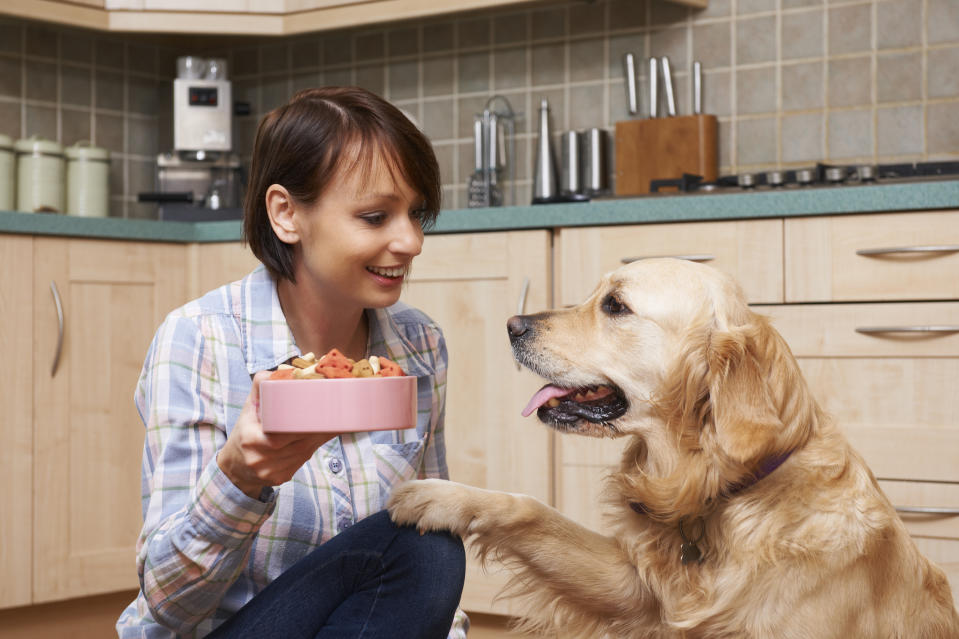 Hungry pet enjoying looking forward to treat