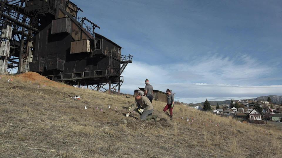 Planting in soil that was once the detritus of the mining industry, in Butte, Montana. / Credit: CBS News