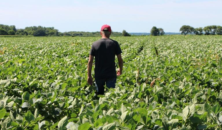 Farmer Terry Davidson walks through his soy fields in Harvard, Illinois in July 2018