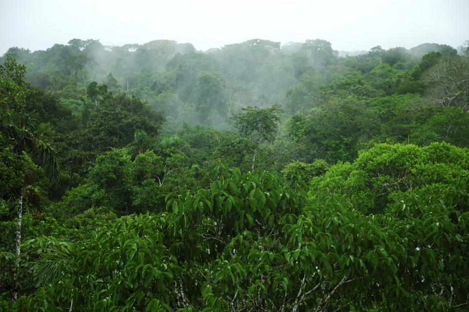 The Amazon's ability to absorb carbon has reduced drastically over the decades (Getty)