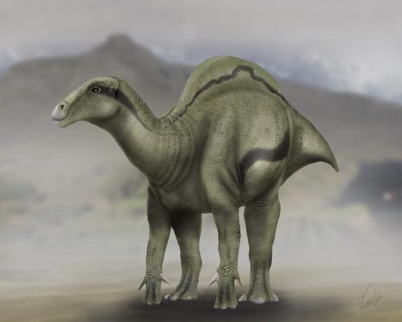 The sail-backed dinosaur <i>Morelladon beltrani</i> lived about 125 million years ago in ancient Spain.