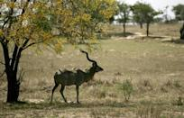 The Selous game reserve in Tanzania, which could be stripped of World Heritage status after poachers have run amok