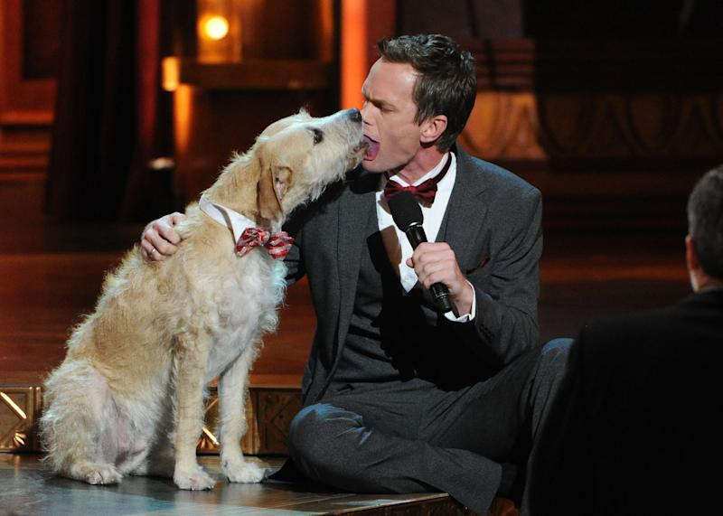 Sunny the Dog licks Neil Patrick Harris on stage at the 67th Annual Tony Awards, on Sunday, June 9, 2013 in New York. (Photo by Evan Agostini/Invision/AP)