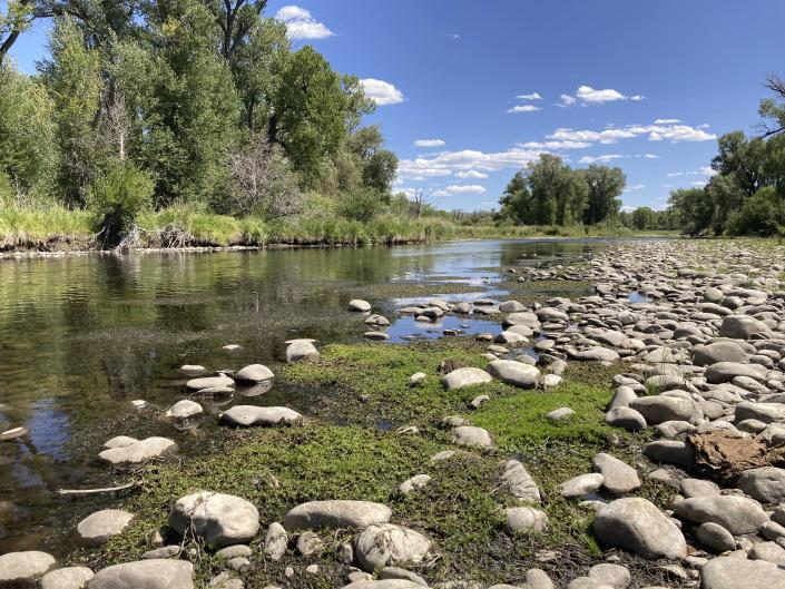Exposed rocks and aquatic plants are seen alongside the North Platte River at Treasure Island in southern Wyoming, on Tuesday,Aug. 24, 2021.The upper North Platte is one of several renowned trout streams affected by climate change, which has brought both abnormally dry, and sometimes unusually wet, conditions to the western U.S. (AP Photo/Mead Gruver)