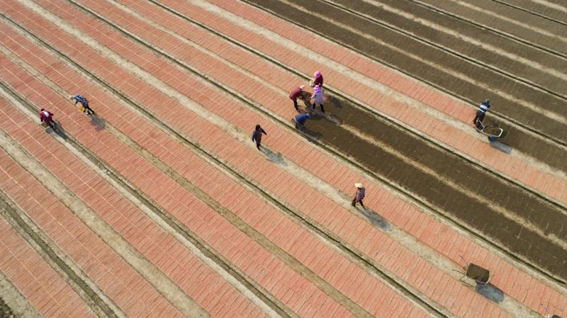 Farm workers sow rice in a seedling pond in hai 'an, east China's jiangsu province, May 11, 2019PHOTOGRAPH BY Costfoto / Barcroft Images (Photo credit should read Costfoto / Barcroft Images / Barcroft Media via Getty Images)