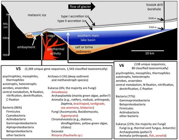 A cross-section of Lake Vostok shows how ice accumulates above the lake, and a list of some of the different organisms discovered in the ice core.