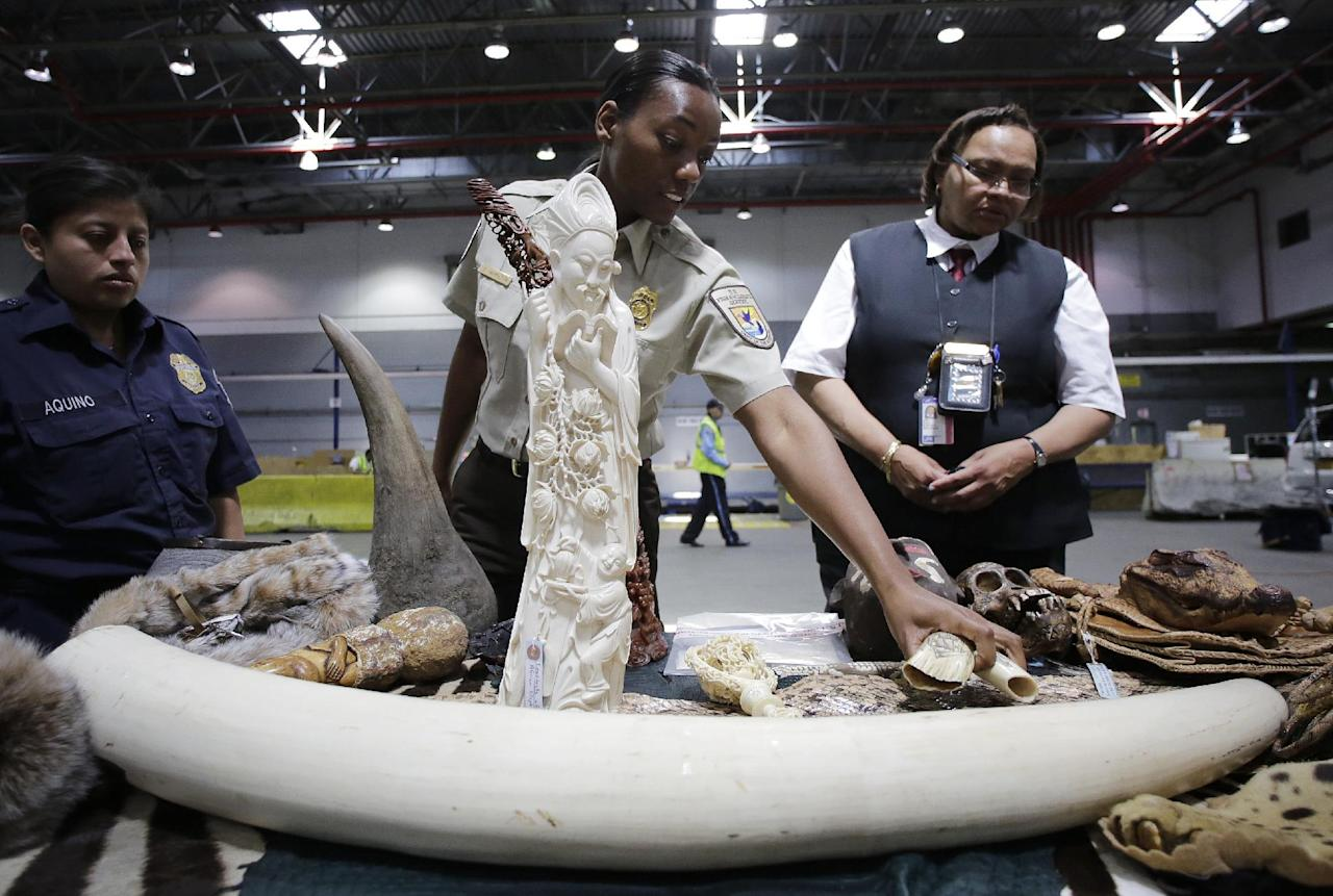 Inspector Hamilton, center, points to confiscated items at a news conference at JFK international Airport, Monday, June 16, 2014 in New York to highlight efforts by U.S. Customs and Border Protection and U.S. Fish and Wildlife to deter illegal trafficking in wildlife. A carved elephant tusk, center, was made into a sculpture. A rhino horn is at left, and an elephant tusk is below. The items displayed were seized from baggage and cargo arriving at the airport. The government is cracking down on the illegal trafficking, saying some of its import-export activity may be linked to terrorists. (AP Photo/Mark Lennihan)