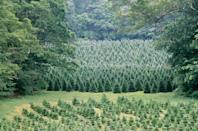 """<p><strong>Wolverine, Michigan</strong></p><p>Bring your family over to <strong><a href=""""http://northstargardens.com/christmas-tree-farm/"""" rel=""""nofollow noopener"""" target=""""_blank"""" data-ylk=""""slk:North Star Gardens"""" class=""""link rapid-noclick-resp"""">North Star Gardens</a></strong>, where you can watch Christmas movies while sitting on haybales and sipping free hot cocoa or coffee. They even provide a free gift for your kids.<br></p>"""