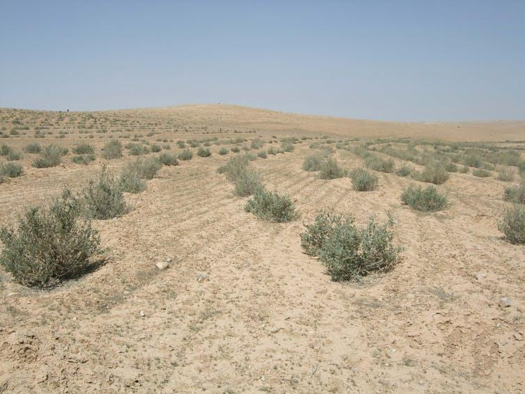 Hillside covered in bare dry soil interspersed with small bushes.