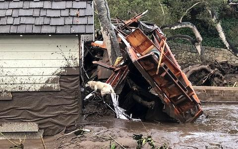 A search dog looks for victims in damaged homes - Credit: Reuters