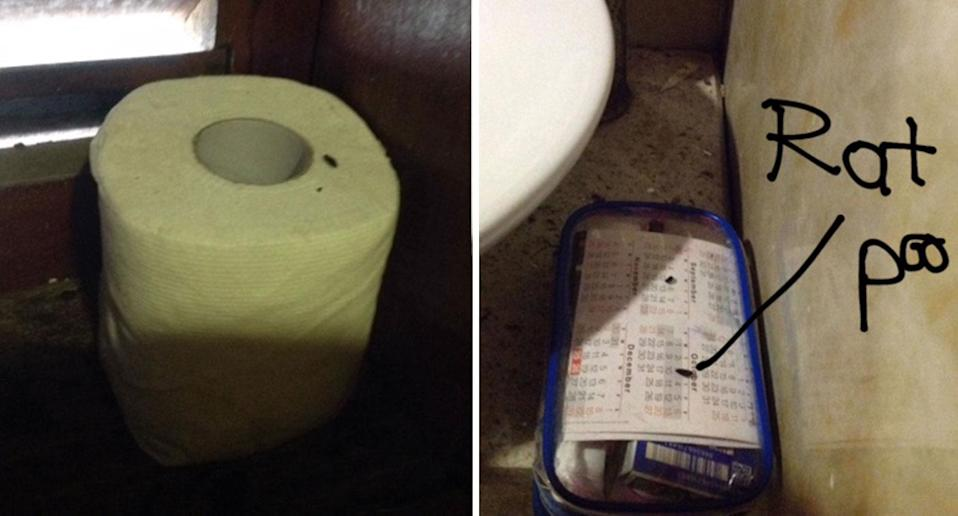 Rat droppings were found in a friend's cabin after they spotted a rat in their room. Source: Lynne Ryan
