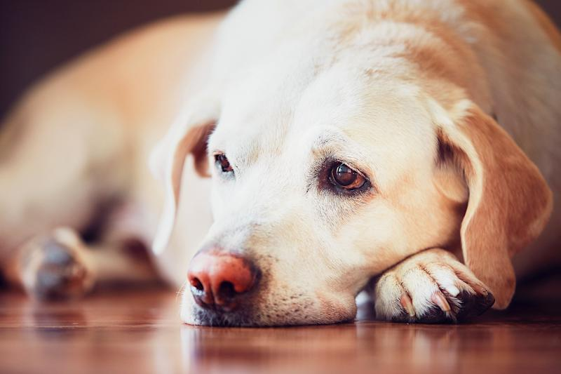New Law 'Finally' Makes Animal Cruelty a Federal Crime: 'America's Beloved Pets Are Safer'