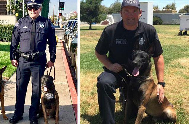 Ike, the K-9 partner of fallen Californian cop Sergeant Michael Pershall has been retired and will be allowed to live with his late partner's grieving family. Picture: Modesto Police Canine Association