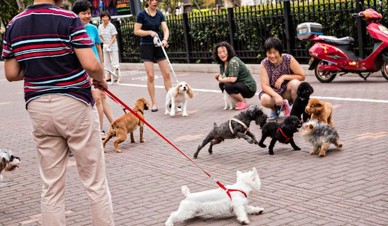 It's war on man's best friend: a spate of dog poisonings hit China as frustration with owners turns murderous
