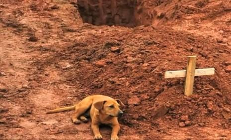 Leao, a dog in Brazil, sits vigil at her owner's gravesite after fatal landslides in January 2011: Leoa is one of many dogs who have recently shown courageous acts of loyalty for the ones they love.
