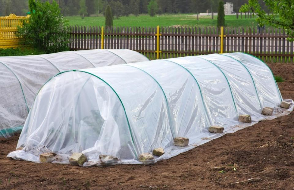 "If you've got a vegetable garden you're hoping to keep healthy for springtime, it's imperative that you protect those edibles before the first frost. Even if your vegetables are cold-tolerant, like carrots or winter greens, Rose recommends that all gardeners ""cover [their] vegetable garden with a cold frame or hoop house"" to keep frost from damaging the plants."