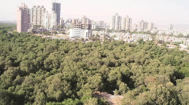 mumbai mangroves, mangroves in mumbai, mumbai mangrove destruction, mumbai trees destruction, mumbai city news