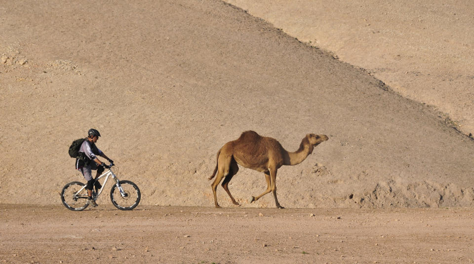 Not a completely atypical scene when cycling through a desert in Israel (Getty Images)