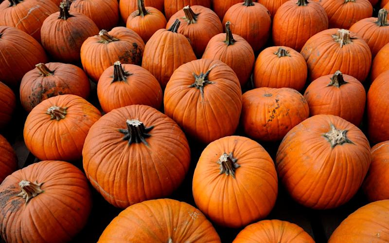 Not just for Halloween: pumpkins and squashes are delicious year round... -  Nam Y. Huh