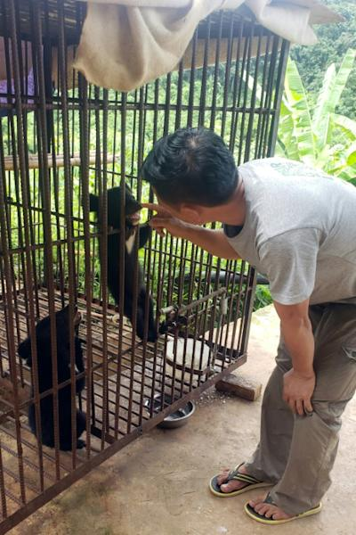Many Asiatic black bears used in bile farming are starved, dehydrated, wounded and psychologically scarred (AFP Photo/Handout)