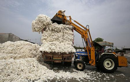 An employee unloads cotton from a truck at a cotton processing unit in Kadi town