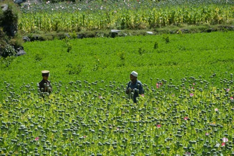 The vast majority of the world's opium and heroin comes from Afghanistan, with production and exports centred in areas controlled by the Taliban