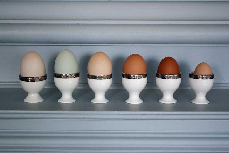 Selection of eggs available at Llangoed Hall