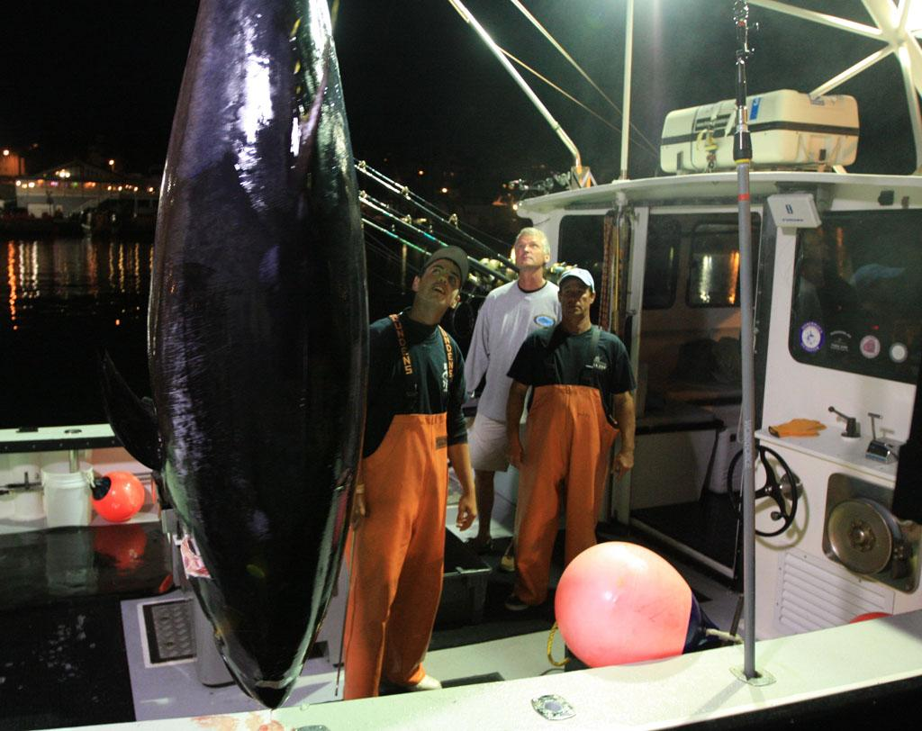 Gloucester, MA - Paul Hebert and Sandro Maniaci admiring the tuna they just caught.