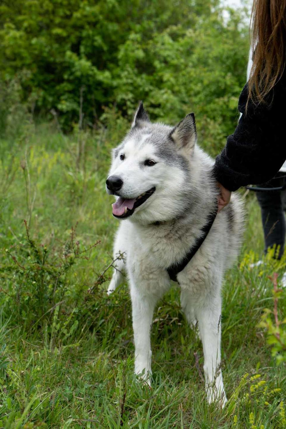 Samantha and her family care for over 30 rescued Husky dogs (PA Real Life/Virgin Experience Days).