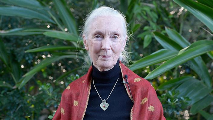 Dr. Jane Goodall at a reception in honor of Disney Conservation Funds 20th anniversary on April 18, 2016 in Orlando, Florida. / Credit: Gustavo Caballero / Getty Images