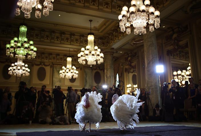 Peas and Carrots, the national Thanksgiving turkey and its alternate, are shown to members of the media during a press conference held by the National Turkey Federation, Nov. 19, 2018, at the Willard Hotel in Washington, D.C. (Photo: Win McNamee/Getty Images)
