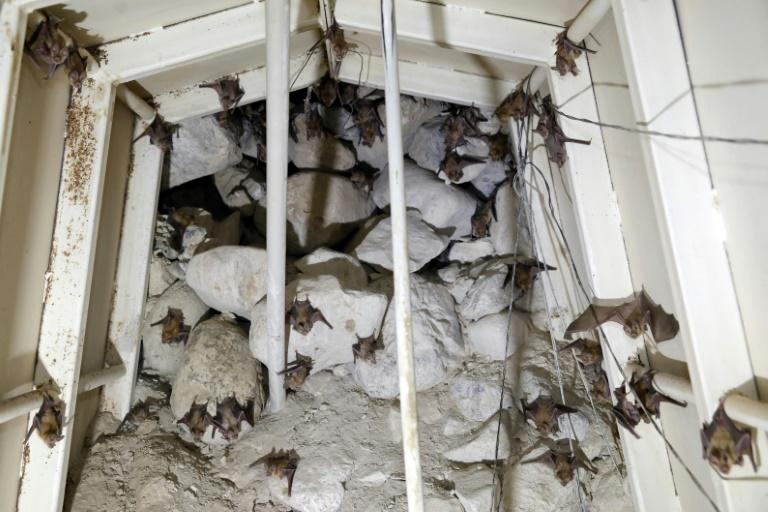 """The military outposts were made into """"alternative spaces"""" for bats to roost after human activity damaged natural caves in the area (AFP Photo/MENAHEM KAHANA)"""
