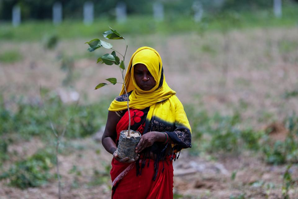 A labourer prepares to plant saplings for an annual tree plantation campaign on the outskirts of Prayagraj in northern Uttar Pradesh state, India (AP)
