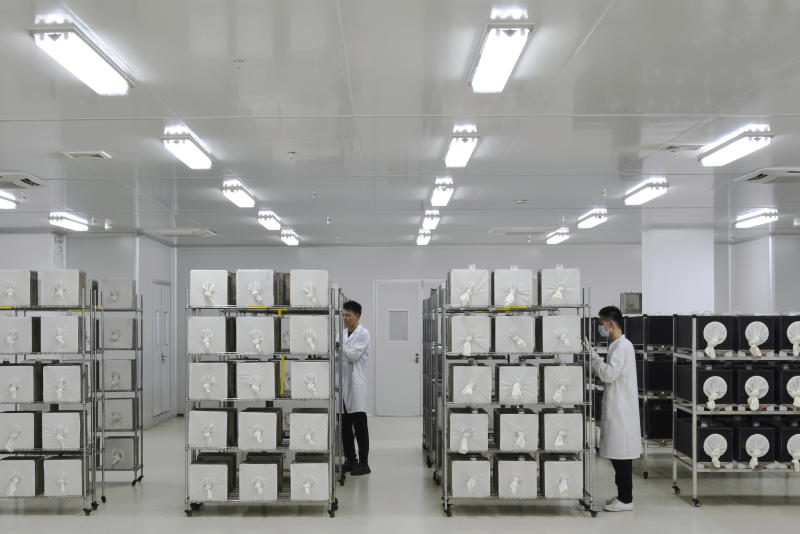 This July 13, 2019 photo provided by Guangzhou Wolbaki Biotech shows containers where adult Aedes albopictus mosquitoes are being raised at the company's lab in Guangzhou, China. Researchers zapped the insects with a small dose of radiation and infected them with a virus-fighting bacterium called Wolbachia. Males and female mosquitoes with different types of Wolbachia won't have young that survive. So researchers intentionally infect males with a strain not found in the area and then release the insects.  (Guangzhou Wolbaki Biotech via AP)