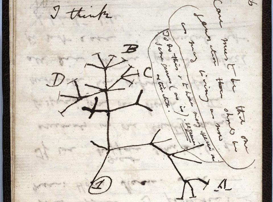 The 1837 'Tree of Life' sketch on a page from one of the lost notebooks of British scientist Charles Darwin.