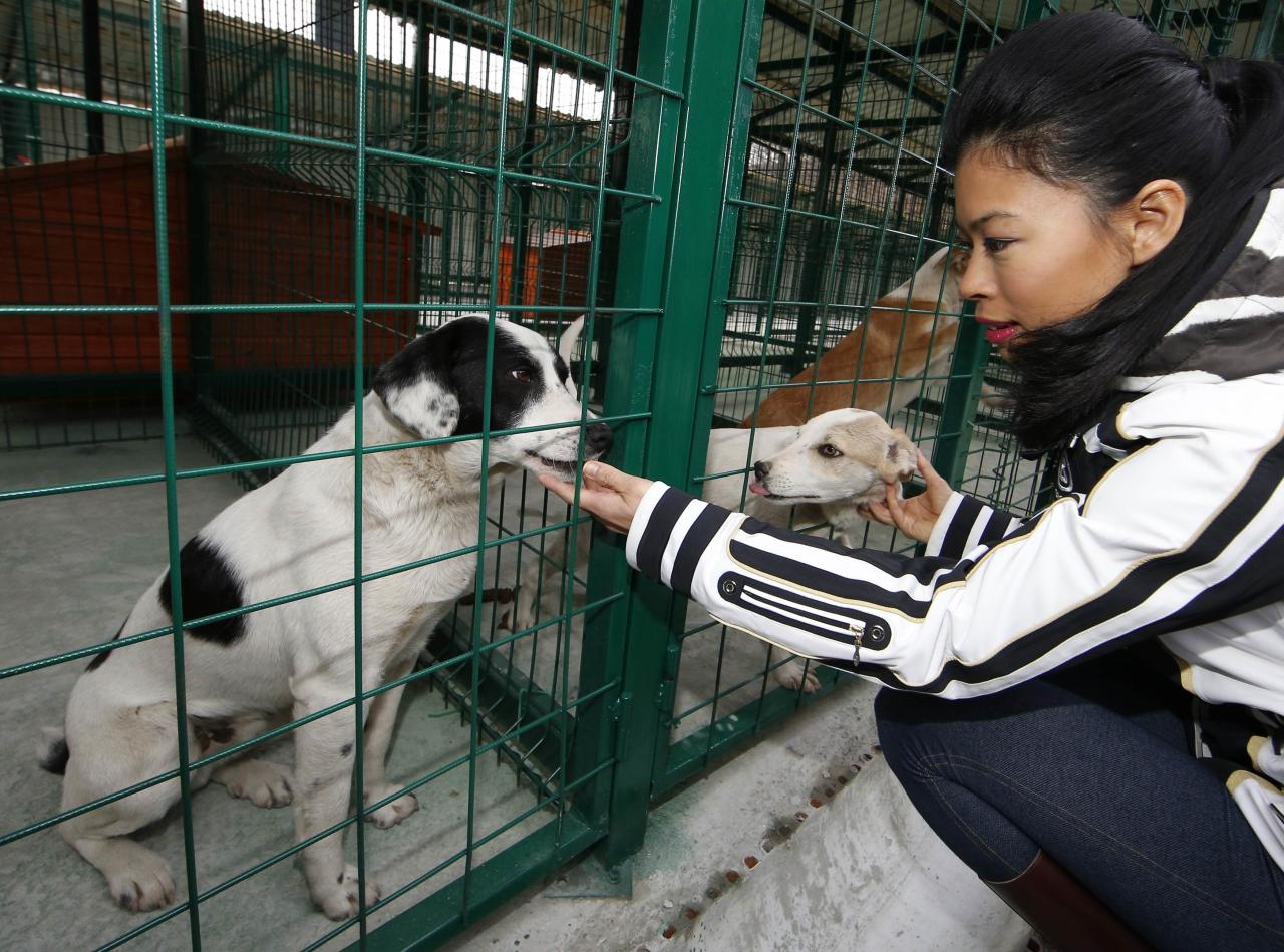 Vanessa Mae pets dogs at the PovoDog dog shelter run by the Volnoe Delo Oleg Deripaska Foundation in Baranovka near Sochi during the 2014 Sochi Winter Olympics, February 22, 2014. REUTERS/Eric Gaillard (RUSSIA - Tags: SPORT OLYMPICS ANIMALS)