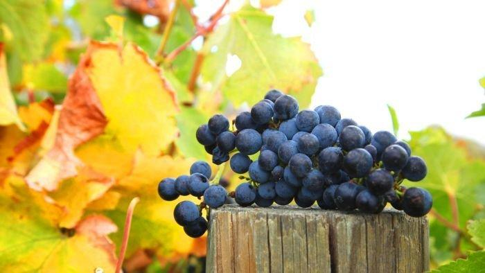 Wine region protection worries other farmers