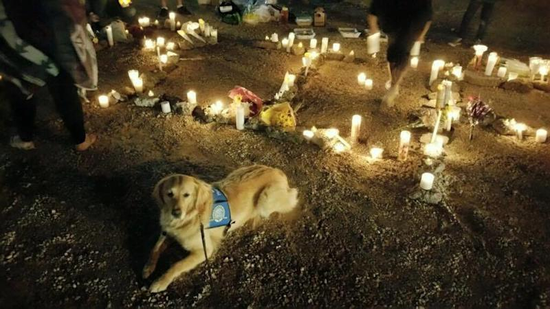 A comfort dog named Ruthie at a candlelit vigil following a mass shooting in Las Vegas. (LCC K-9 Comfort Dogs)