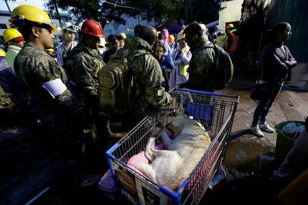 Navy officers take care of rescue dog Frida as she rests on a shopping cart after an earthquake in Mexico city, Mexico September 22, 2017. REUTERS/Jose Luis Gonzalez